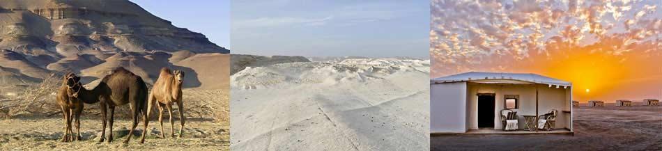 camping desierto