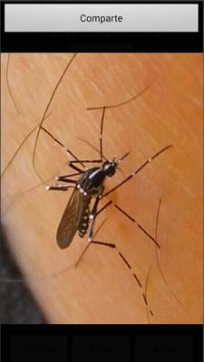 App para el camping - mosquito alert